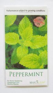 Benih Peppermint Isi Biji 50 Butir
