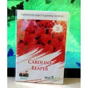 Benih Carolina Reaper Pepper Cabai Terpedas di Dunia