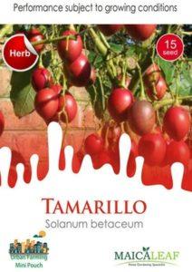 Benih Terong Belanda (Tamarillo) 20 Biji